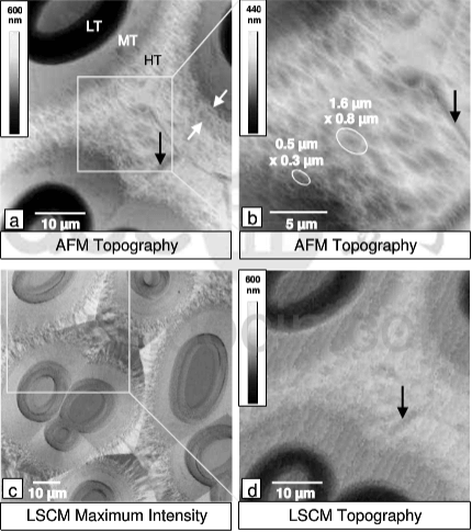 (a,b)AFM topography and (c,d) laser scanning confocal microscopy images of an infiltrated carbon felt after ion etching