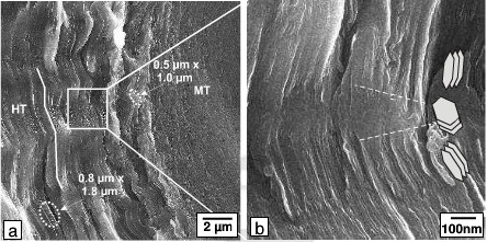 SEM micrographs of the fracture surface of the composite