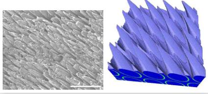 fig.5-left-SEM-micrograph-of-the-ablated-surface-of-a-bundle-in-4D-CC-composite.